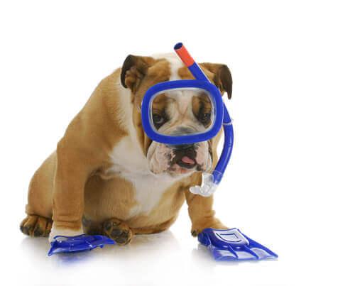 Come insegnare al cane a immergersi sott'acqua