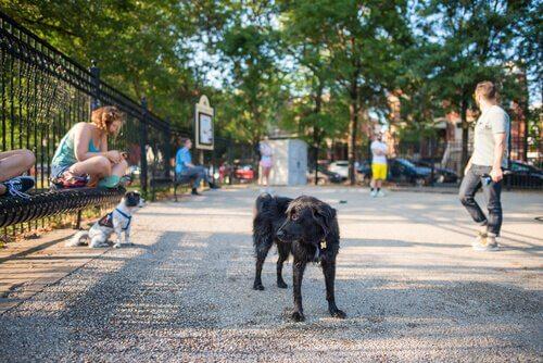 un cane da solo in un marciapiede del parco