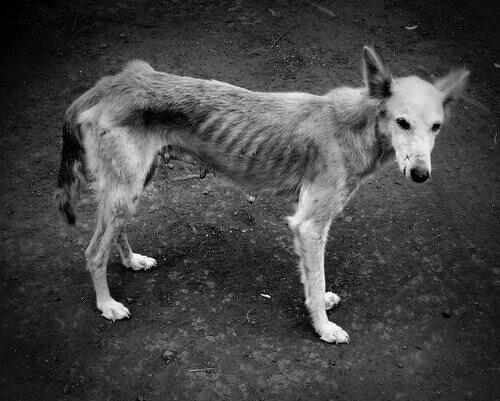 un cane denutrito di profilo