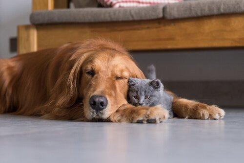 Cane e gatto dormono sul pavimento