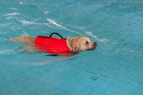 Riabilitazione del cane in acqua