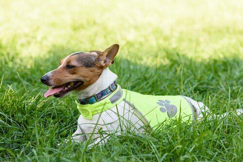 un cane sdraiato nell'erba con giubbino