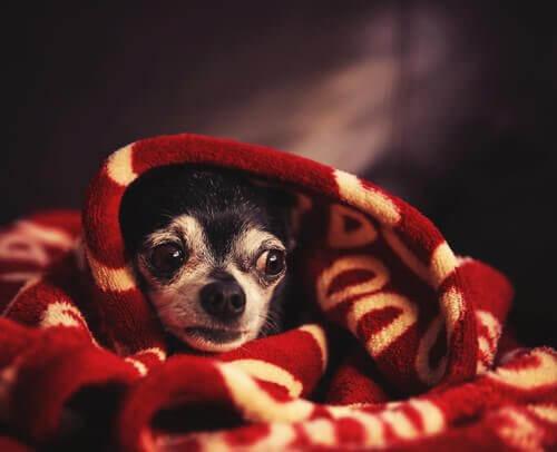 Come calmare il cane durante un temporale