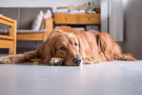 Animali sedentari: sintomi, rischi e consigli