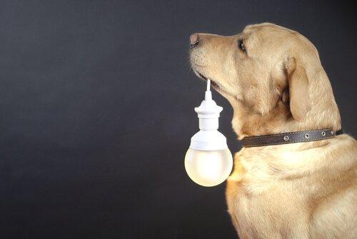Collari luminosi per cani randagi: di cosa si tratta?