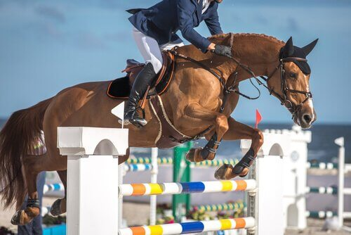 10 sport equestri che dovete provare