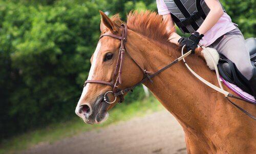 un cavallo al galoppo con fantino