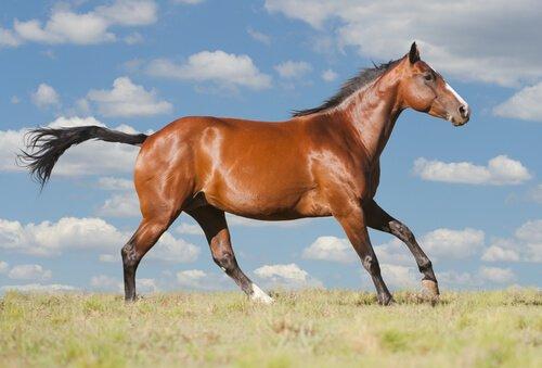 un cavallo corre nell'erba sotto il cielo