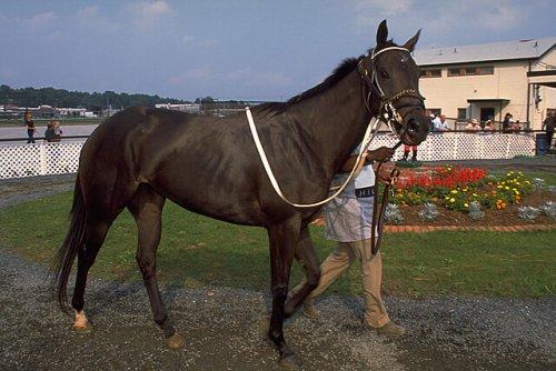 un cavallo da corsa accompagnato dal padrone