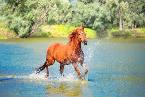 un cavallo selvaggio corre nell'acqua