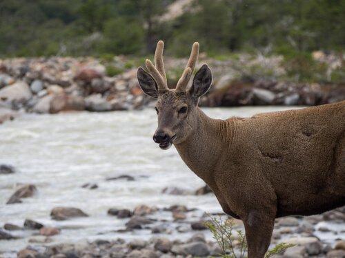 5 animali della Patagonia che dovete conoscere