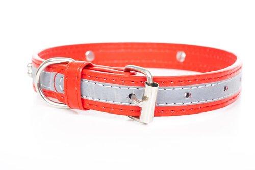 collare luminoso per cani grigio e rosso