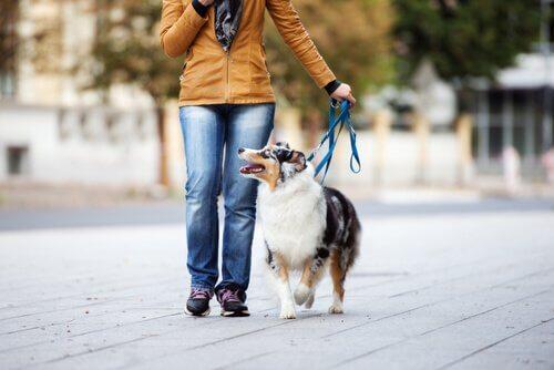 cane al guinzaglio a spasso con la padrona