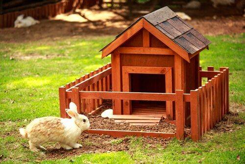 Coniglio domestico fuori dalla sua casetta