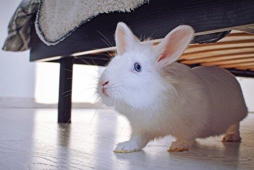 Coniglio esce da sotto il letto