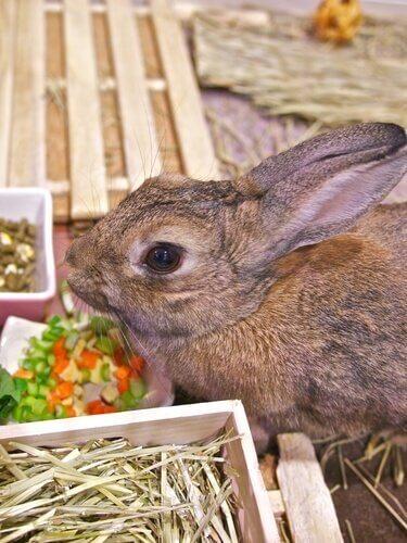 un coniglio nella sua gabbia con la ciotola del mangime