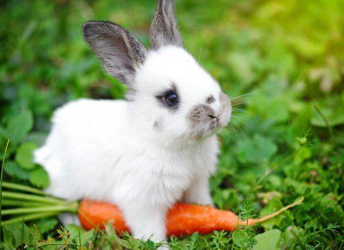 I migliori alimenti per conigli