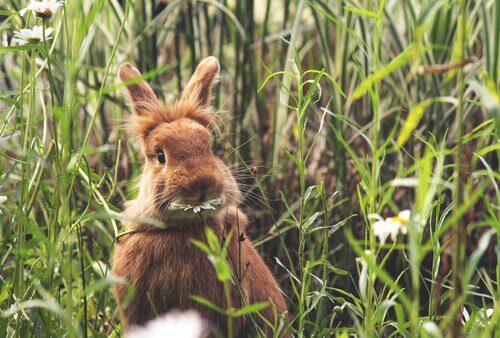 Linee guida per l'alimentazione dei conigli
