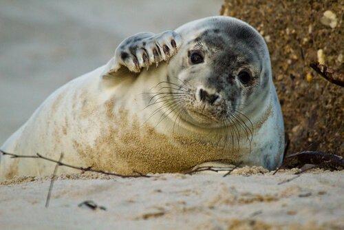5 animali che popolano la spiaggia