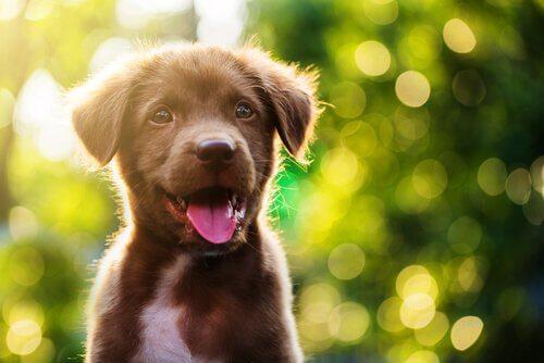 un cucciolo con la bocca aperta in un bosco