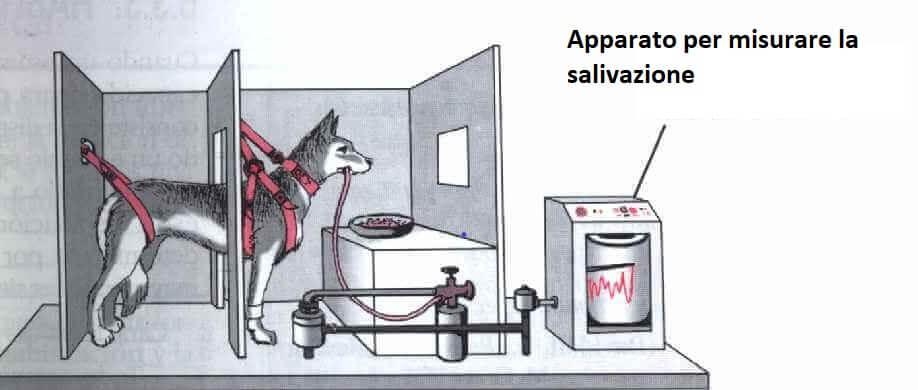 Immagine esperimento Pavlov
