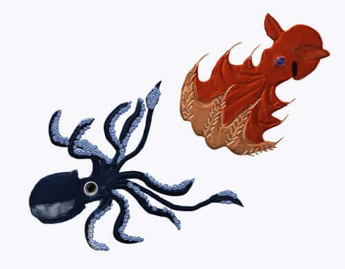 Quali sono le differenze tra polpi e calamari?
