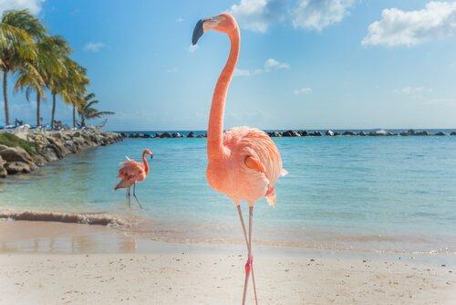 fenicotteri rosa su una spiaggia in piedi