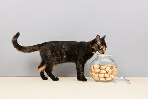Un gattino annusa un contenitore pieno di biscotti
