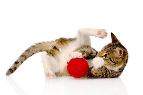 I migliori giochi di intelligenza per gatti