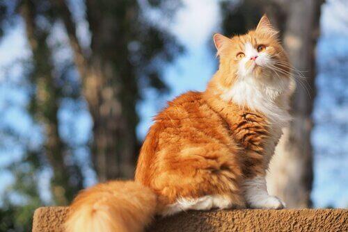 un gatto a pelo lungo prende il sole su una staccionata
