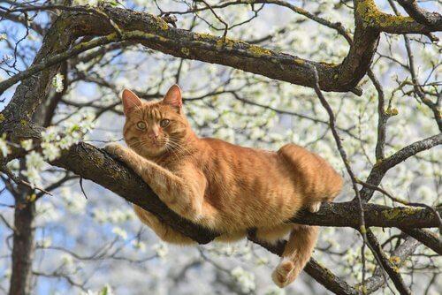 un gatto adulto rosso sdraiato su un ramo