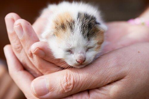 Che fare se trovate una cucciolata di gattini in strada?