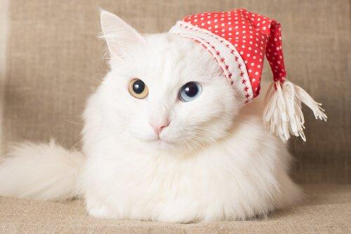 7 razze di gatti a pelo lungo da non perdere