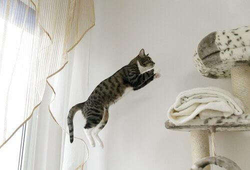 un gatto che salta in casa