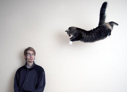 un gatto che cerca di volare verso il padrone