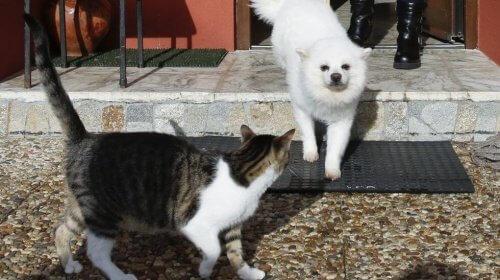 Gatto e cane bianco si incontrano per strada