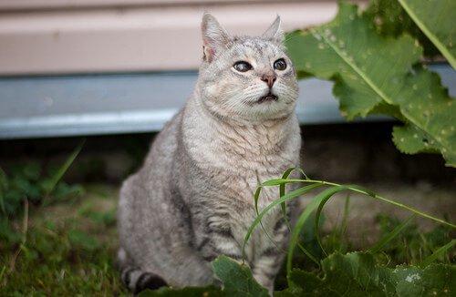 Gatto grigio seduto su un prato