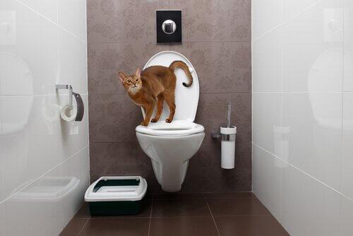Gatto in bagno in piedi sul WC