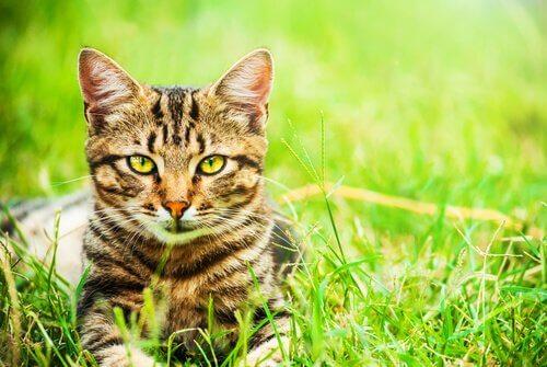 5 motivi per adottare un gatto meticcio