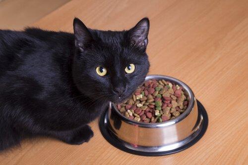 un gatto nero accanto alla ciotola con il mangime