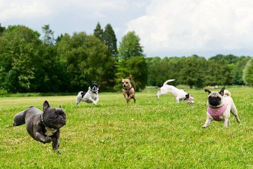 L'importanza di vigilare il cane al parco