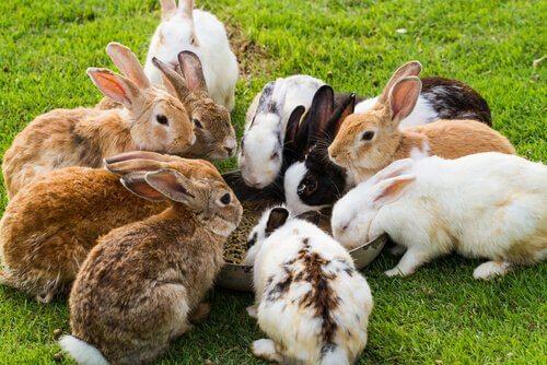 un gruppo di conigli intorno a una ciotola con il mangime