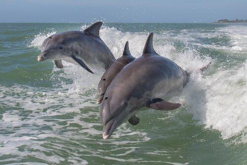 un gruppo di delfini salta seguendo la scia di una barca
