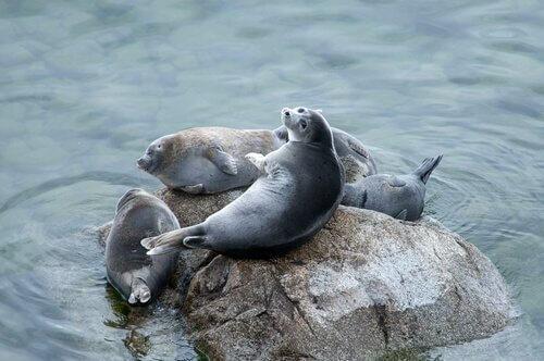 un gruppo di foche appoggiate su uno scoglio