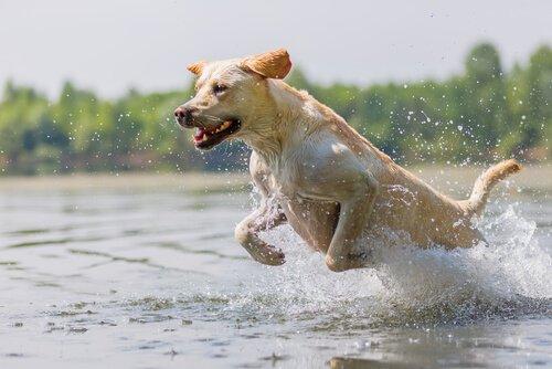 Come far fare esercizio al cane correttamente