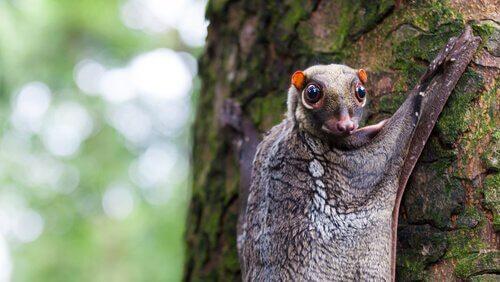 Animali arboricoli: 5 specie che vivono sugli alberi