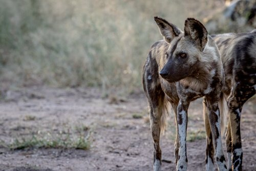 La fauna del Sudafrica