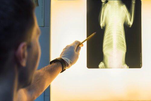 un medico veterinario mostra la lastra di un cane