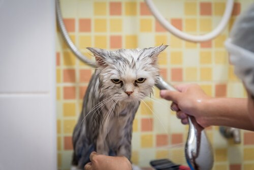 Micio durante la doccia con espressione triste