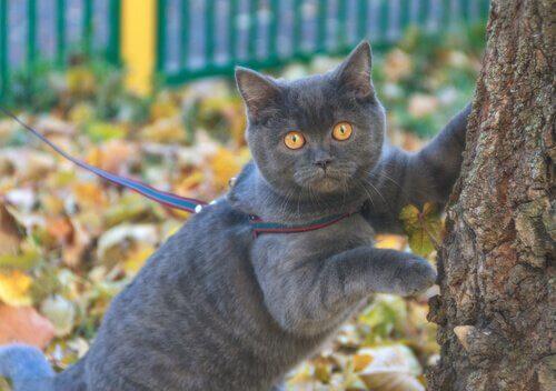 un micio grigio con le zampe appoggiate a un albero